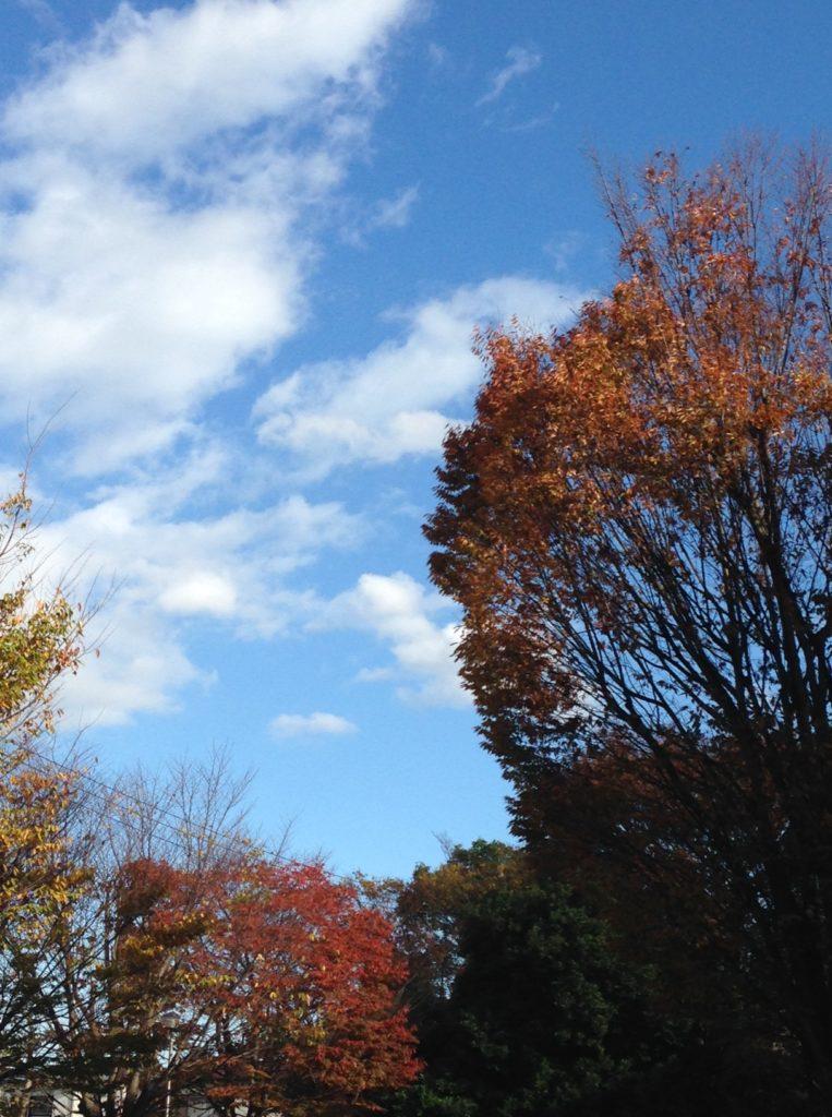 晩秋の写真1