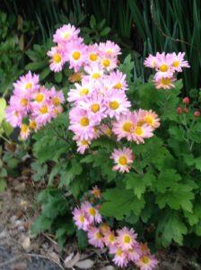 秋の花② 写真