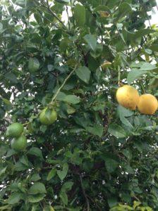 秋の果実①
