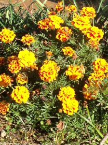 秋の花① 写真