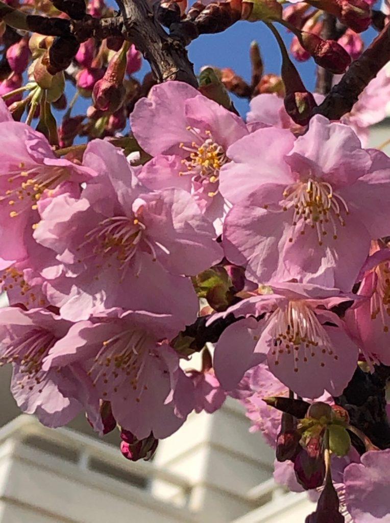 19-006-3 桜