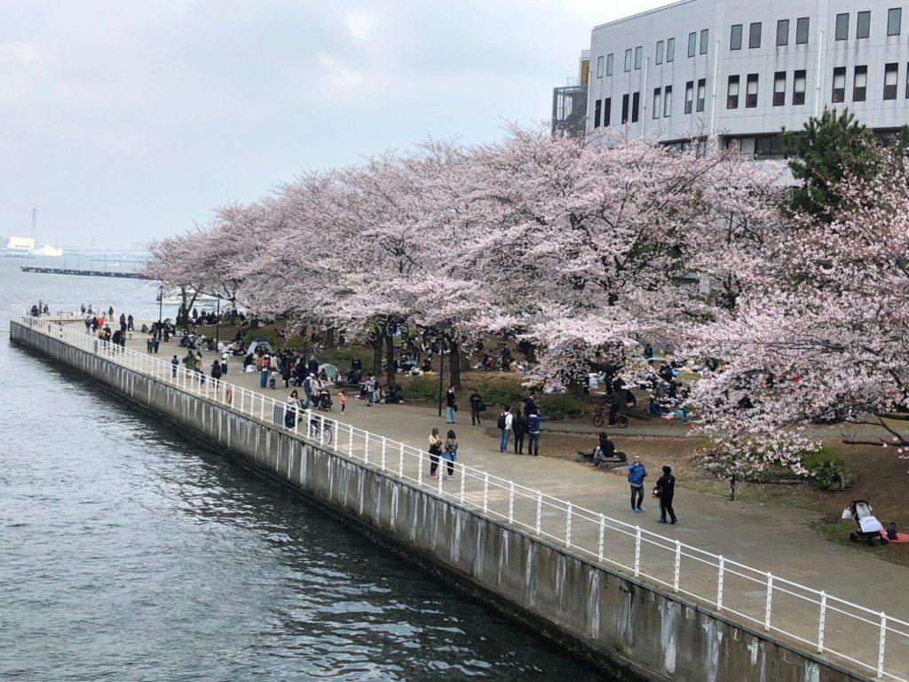 19-101-2 桜と海